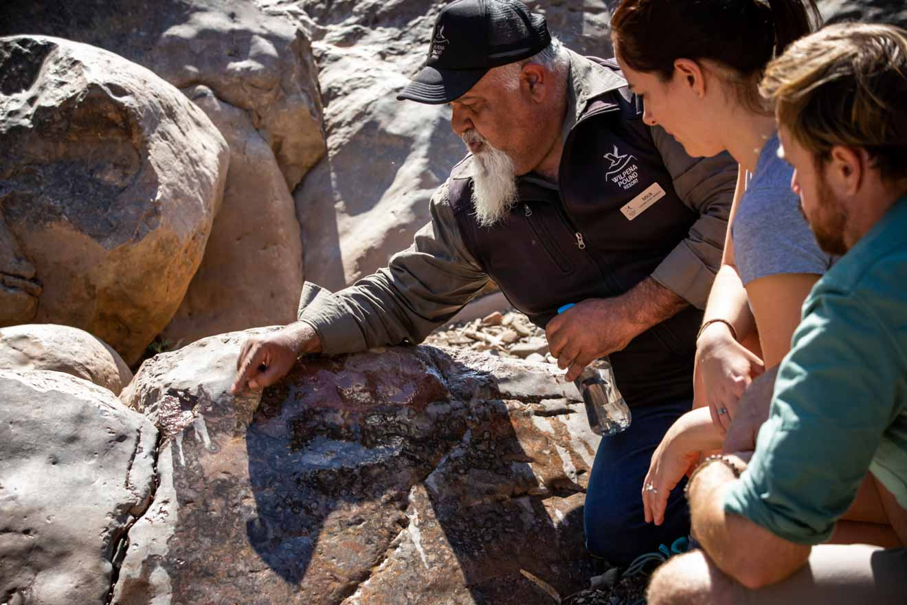 Guided tour itinerary at Wilpena Pound Resort - Brachina Gorge Fossils