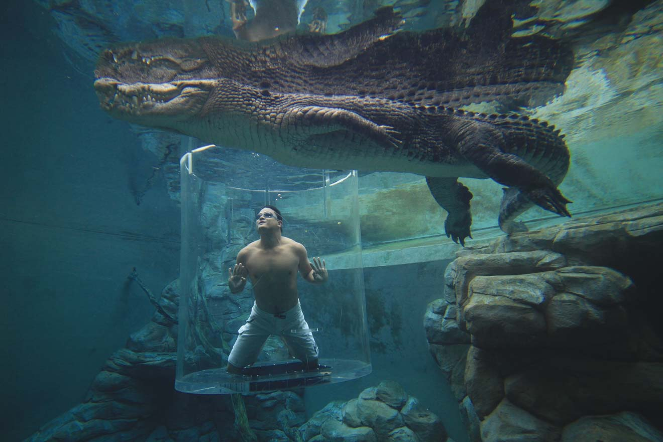 Crocosaurus Cove's Cage of Death Things to do in Darwin in northern territory
