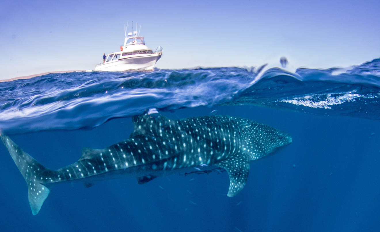 Boat Exmouth Dive best whale shark tour Ningaloo