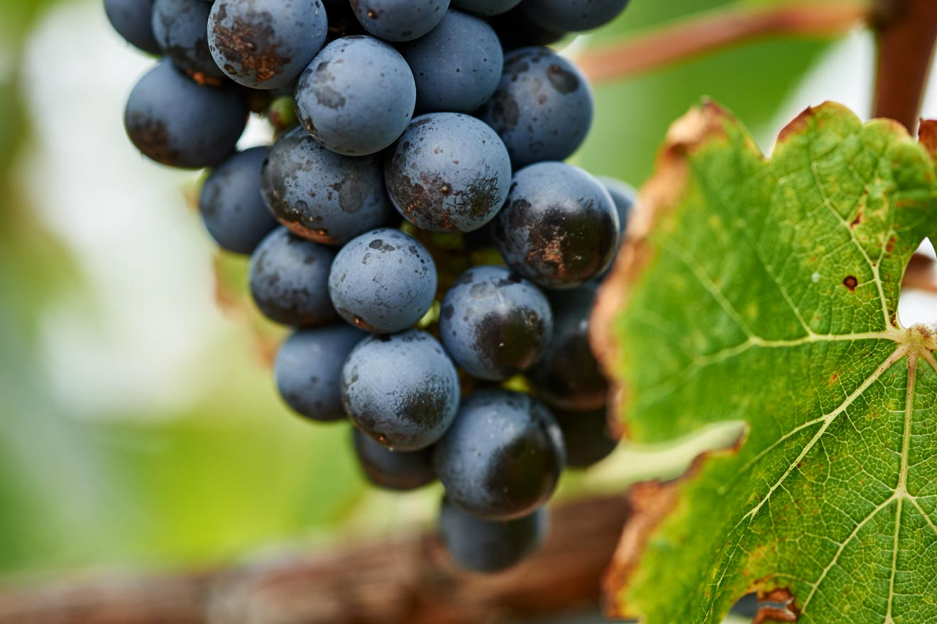 Grape Margaret River Wineries map and list