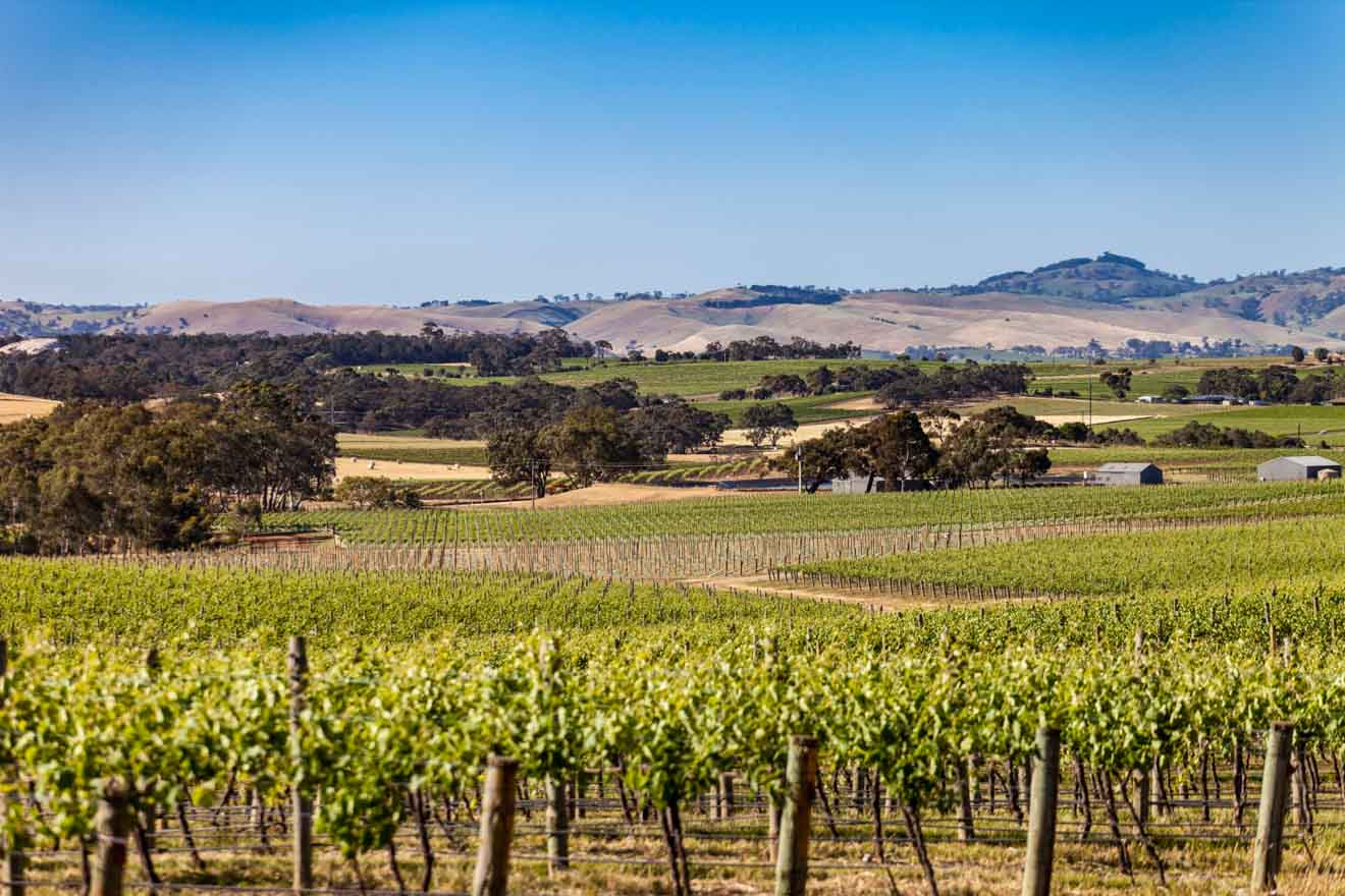 The best of Adelaide, South Australia - Seppeltsfield Things to do in Barossa Valley Wineries