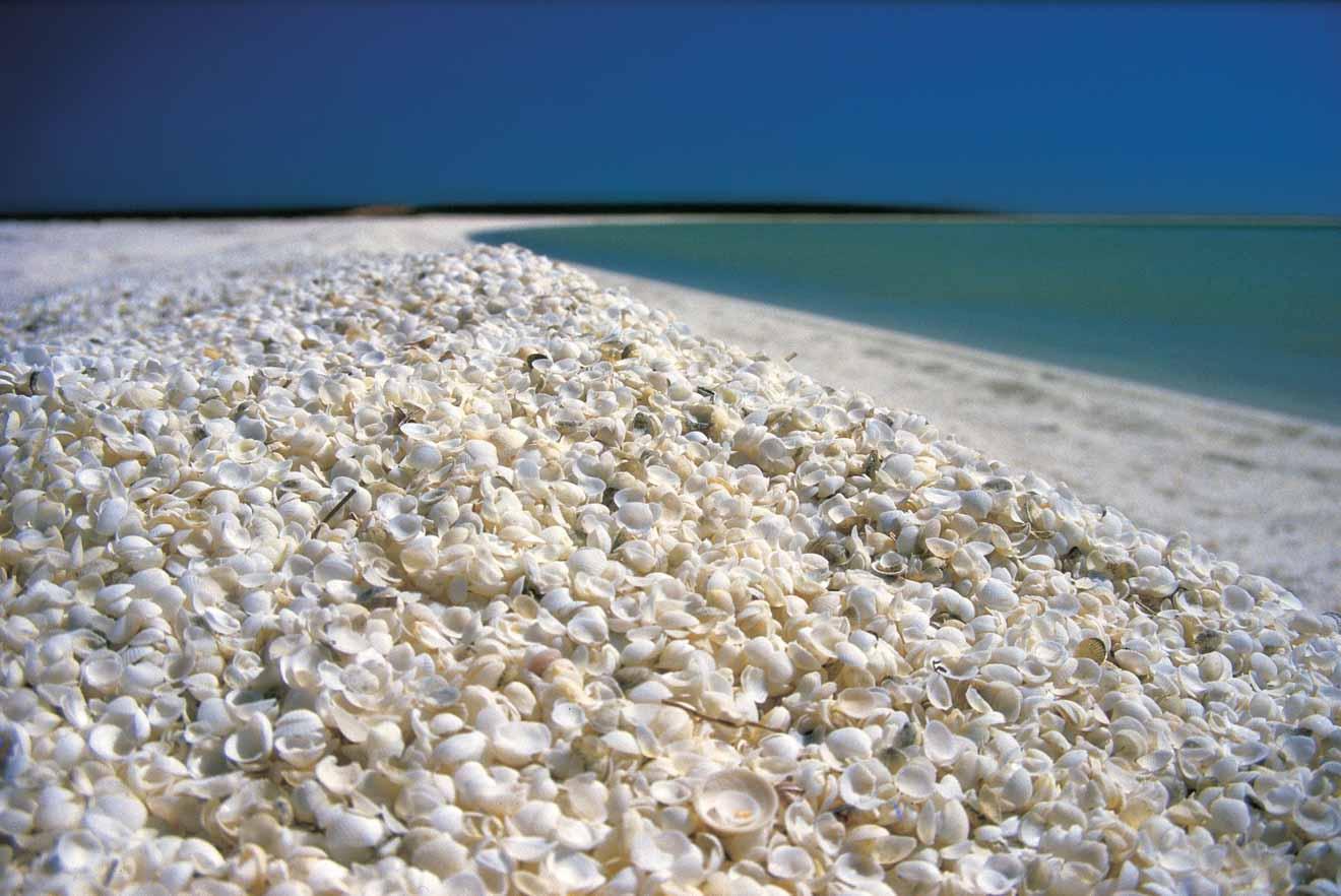Shell Beach Western Australia Road trip planner