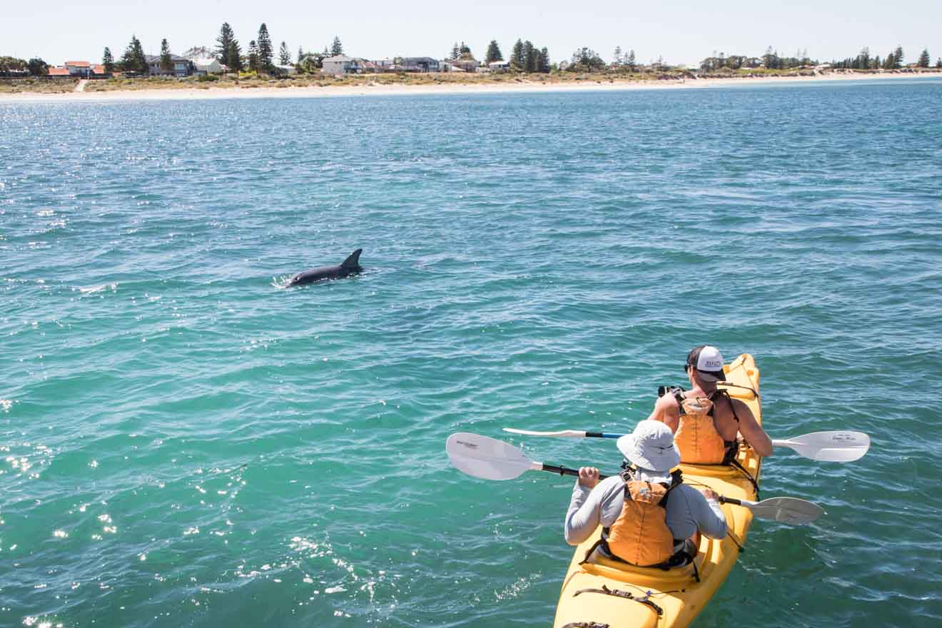 boat and whale watching to do at Shoalwater Islands Marine Park