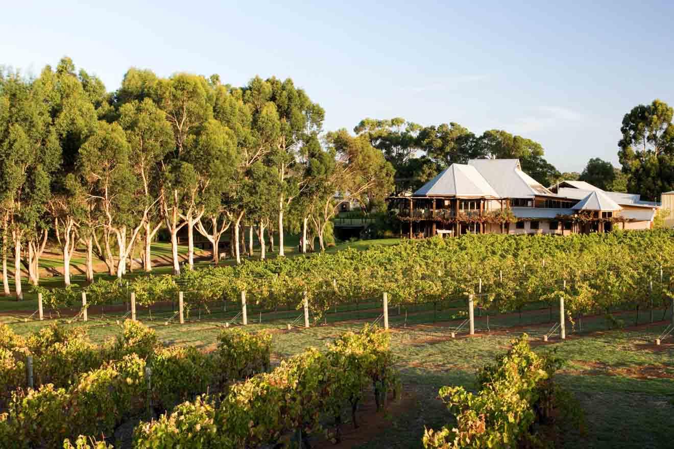 Perth in western Australia - Vasse Felix vineyard Margaret River Wineries