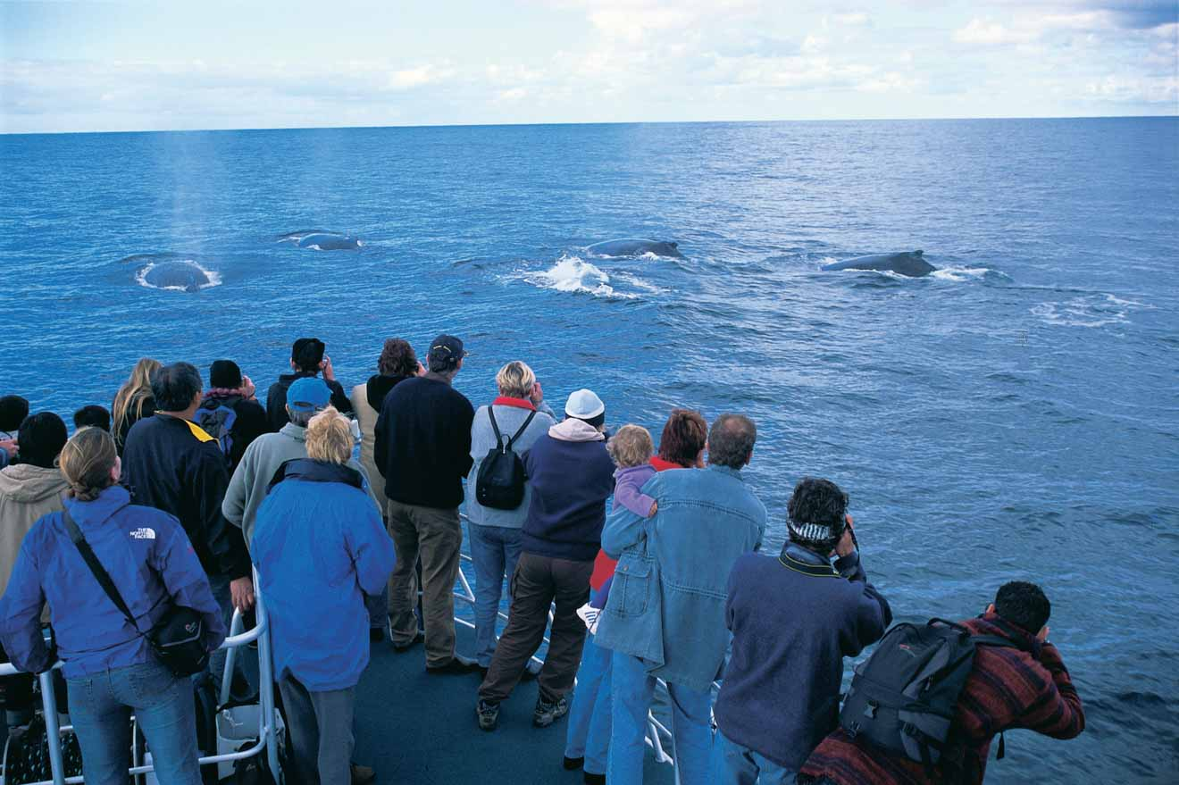 Whale watching in Flinders Bay things to do in trip to margaret river in a ferry