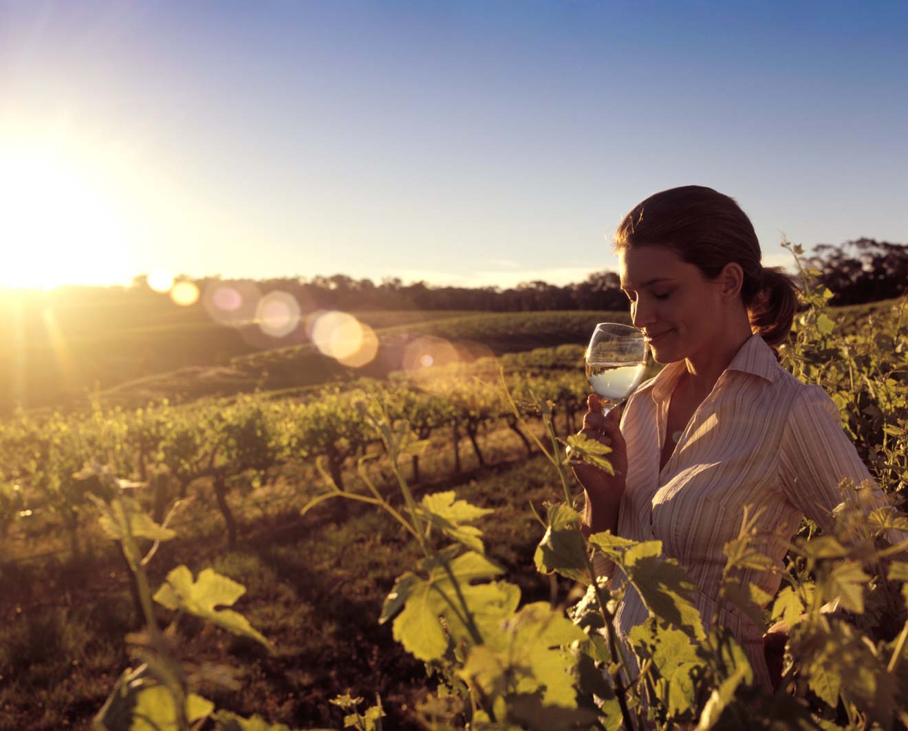 adelaide escapes - Winery, Barossa Valley Day trips from Adelaide