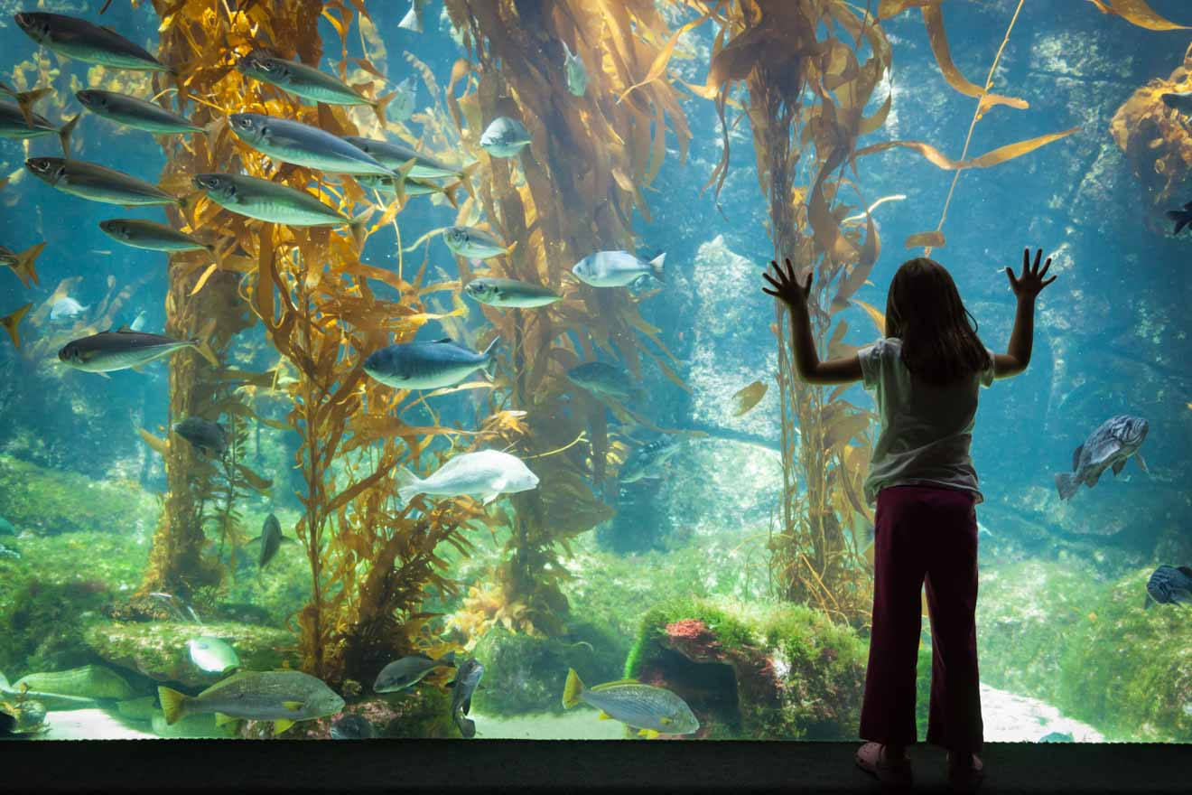 Best tourist spots - aquarium things to do in Merimbula