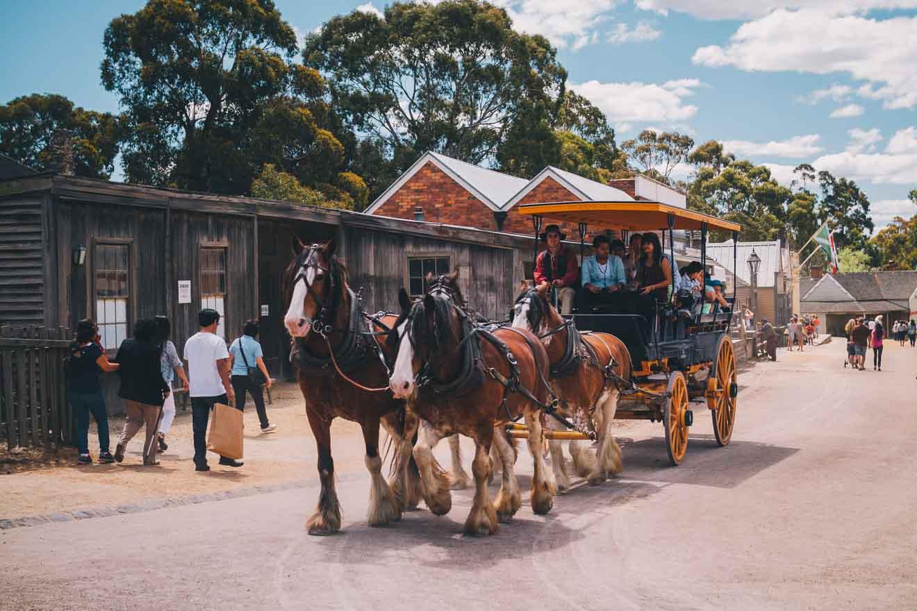 crowded street things to do in ballarat wildlife park