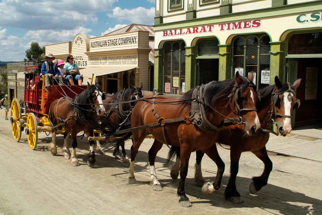 horses things to do with kids in ballarat